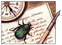 Darwin beetle note