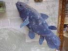 Oxford_u_coelacanth